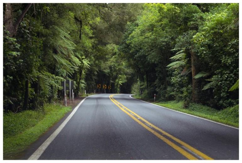 The Glade Rotorua