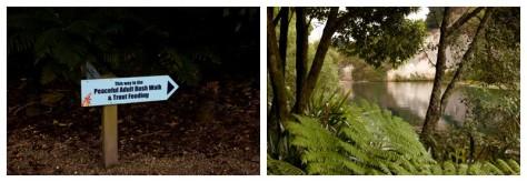 Waitangi Weekend 2016-9580