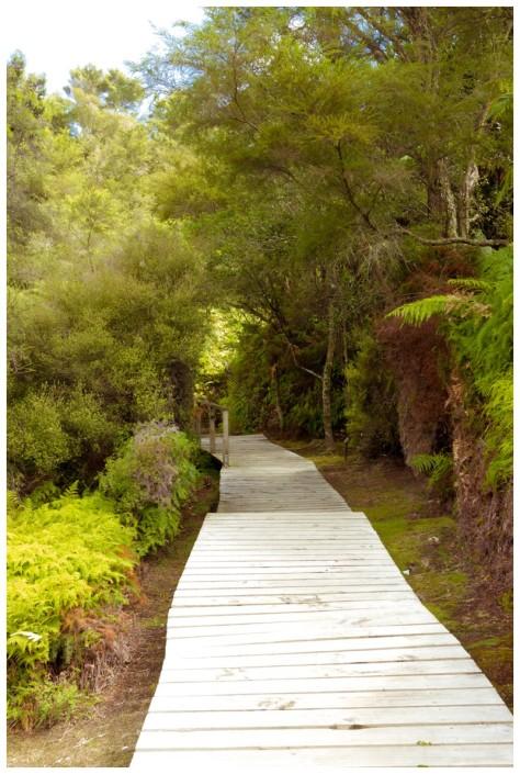 Waitangi Weekend 2016-9715